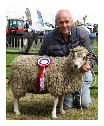 The Dad and Rench Iolanthe the Champion Shetland at The Central & West Fife Agricultural Show 2012